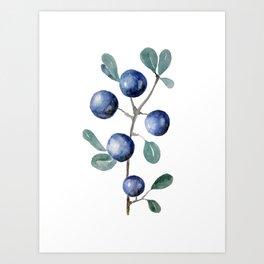 Blackthorn Blue Berries Art Print
