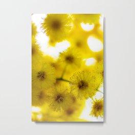 Acacia Flower III Metal Print