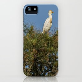 Cattle Egret Perched on Tree iPhone Case