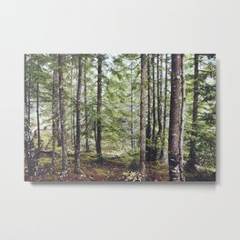 Squamish Forest Floor Metal Print