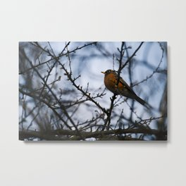 Small Orange Bellied Bird in Tree Metal Print