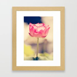 Pink Water Lotus Framed Art Print