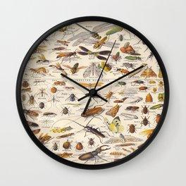 Adolphe Millot Insect Vintage Scientific Illustration Old Le Larousse pour tous llustration Wall Clock