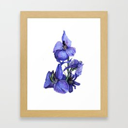 flower dressed in blues Framed Art Print