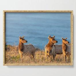 Tule Elk Cows II Serving Tray