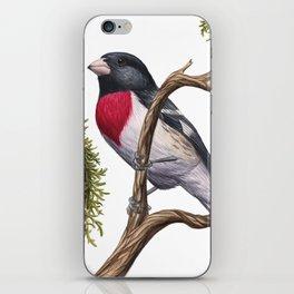 Rose-breasted Grosbeak (Pheucticus ludovicianus) iPhone Skin