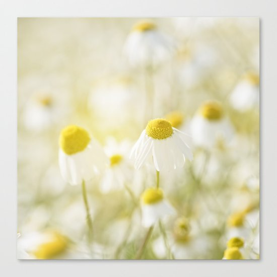 Floral Spring Meadow with Flowers Camomile and Daisies Canvas Print