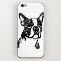 boston terrier iPhone & iPod Skins featuring Boston Terrier by DayLee Doodler