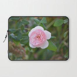 Beautyful pink rose in the garden Laptop Sleeve