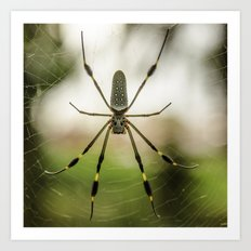 Autumn Spider Art Print