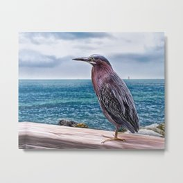Key West Green Heron -  Photo painting Metal Print