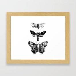 Vintage Butterflies Framed Art Print