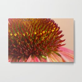 Cone flower colors Metal Print