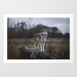 Wolf on Log Art Print