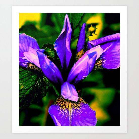 Iris close up Art Print