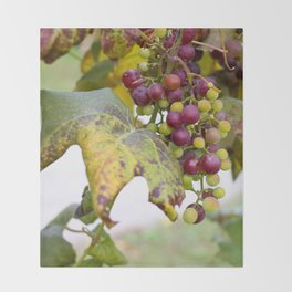 Green and purple grapes on the vine Throw Blanket