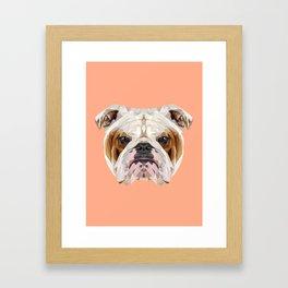 English Bulldog // Peach Framed Art Print