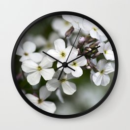 Dames Rocket Wildflowers Wall Clock