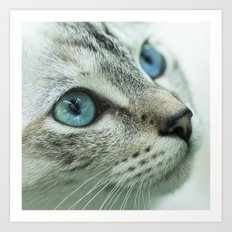 Mimi the cat Art Print