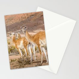 Group of Guanacos at Patagonia, Argentina Stationery Cards