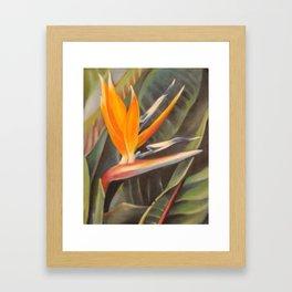 Bird of Paradise 3  Framed Art Print