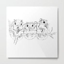 Super Secret Squirrels Metal Print