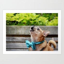 Singing Chihuahua  Art Print