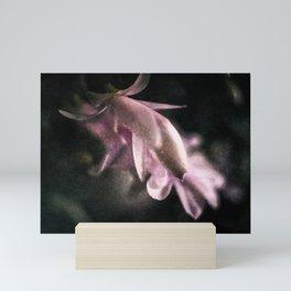 Schlumbergera Mini Art Print