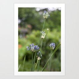 Shakespeare Garden 3. Blue Flowers Art Print