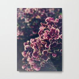 hydrangea - deep purple Metal Print