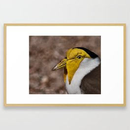 Masked Lapwing Framed Art Print