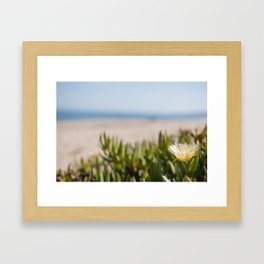 Blooming succulent ground cover on Californian beach Framed Art Print