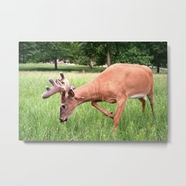 East Park Spring Buck Metal Print