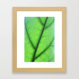 Macro Framed Art Print