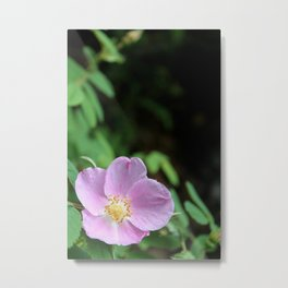 Light Pink Wild Rose Metal Print