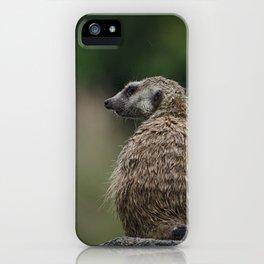 Meerkat 3 iPhone Case