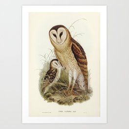 Grass-Owl (Strix candida) illustrated by Elizabeth Gould (1804-1841) for John Goulds (1804-1881) Bir Art Print