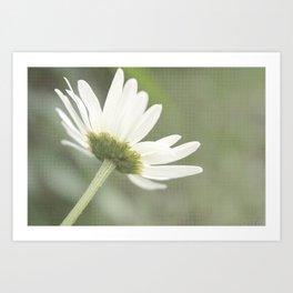 Soft Daisy Flower Art Print