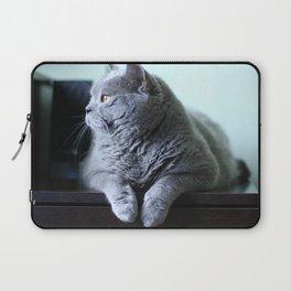 British shorthair fat cat indoor portrait. Laptop Sleeve