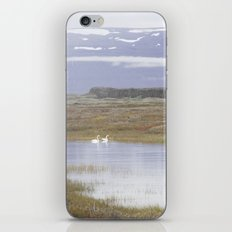 Swans of Iceland iPhone & iPod Skin