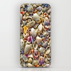 Seashells on the Shore iPhone & iPod Skin