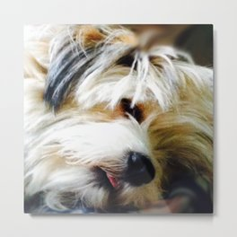 Miss Molly Metal Print