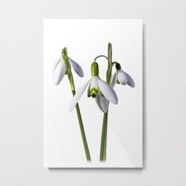 Spring Springs Eternal Metal Print