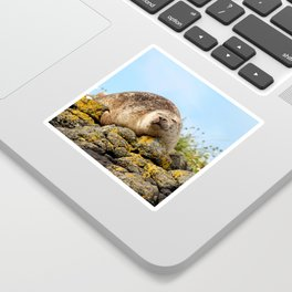 Seal at Dunvegan Castle, Scotland Sticker