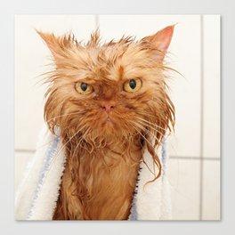 Wet Persian Cat Canvas Print
