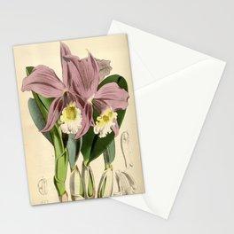 Sophronitis jongheana Stationery Cards