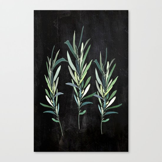 Eucalyptus Branches On Chalkboard Canvas Print
