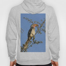 The Real Zazu Hoody