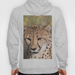 Cheeta Head looking Hoody