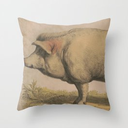Vintage Illustration of a Domesticated Pig (1874) Throw Pillow